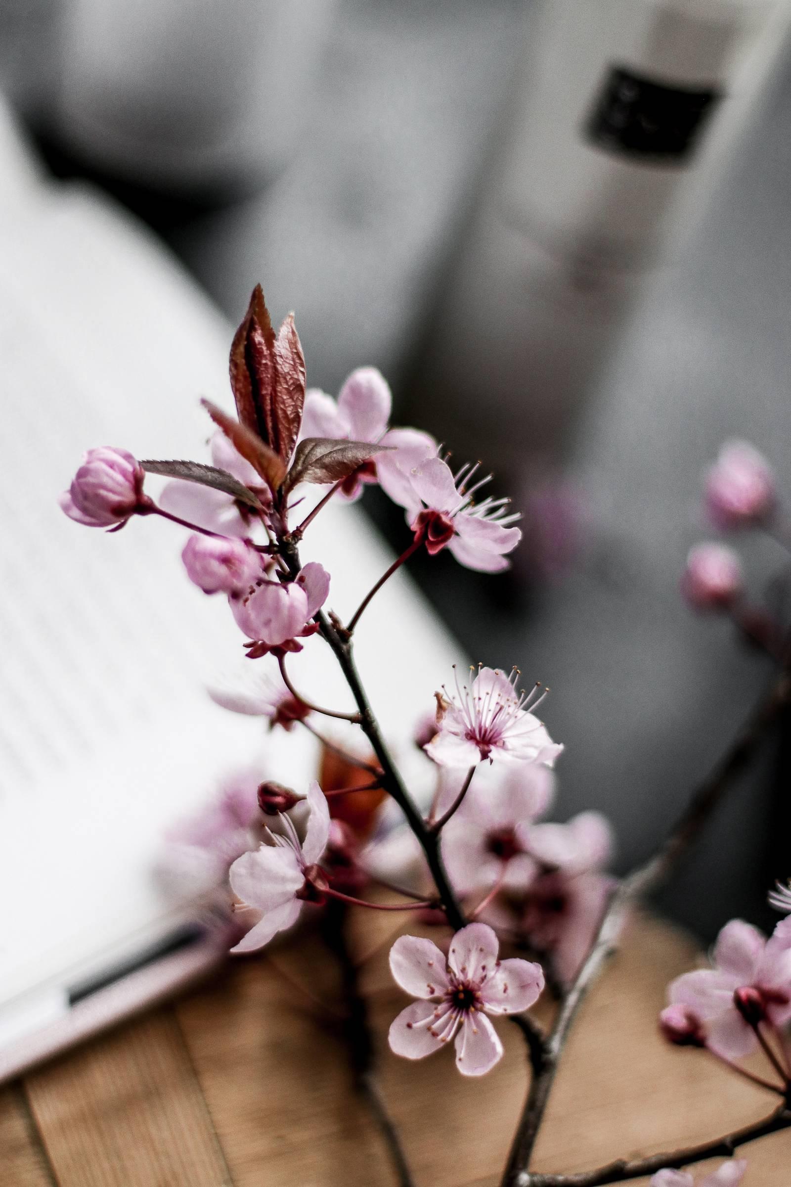 Ritual of Sakura by RITUALS COSMETICS