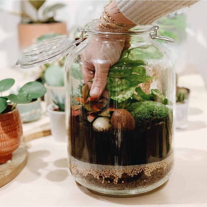 Atelier terrarium - One of a kind concept store